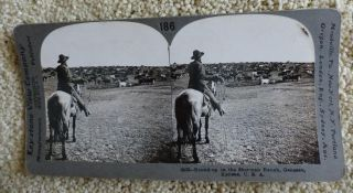 """Round-up on the Sherman Ranch, Geneseo, Kansas."""